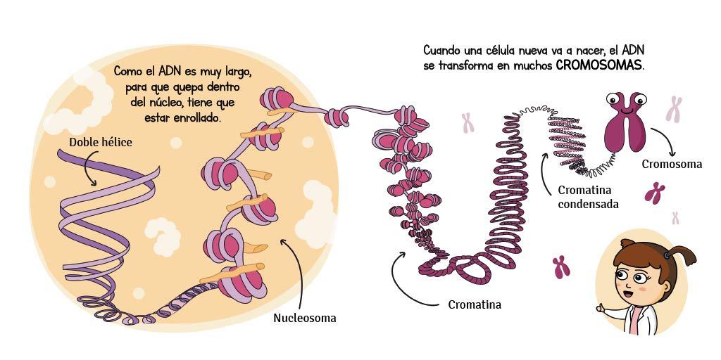 Libro para enseñar genetica a niños pequeños